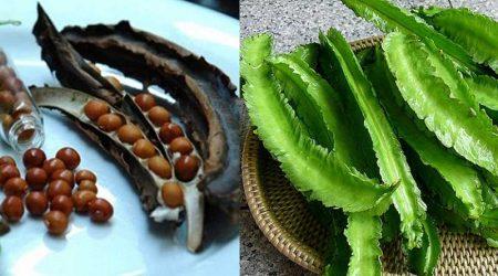 hạt đậu rồng