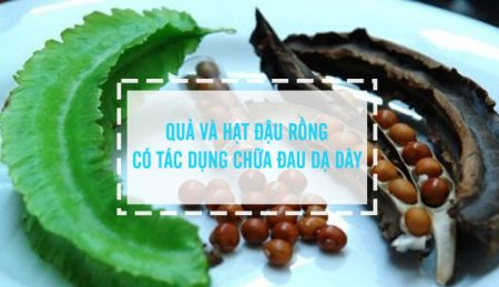 hạt đậu rồng chữa đau dạ dày